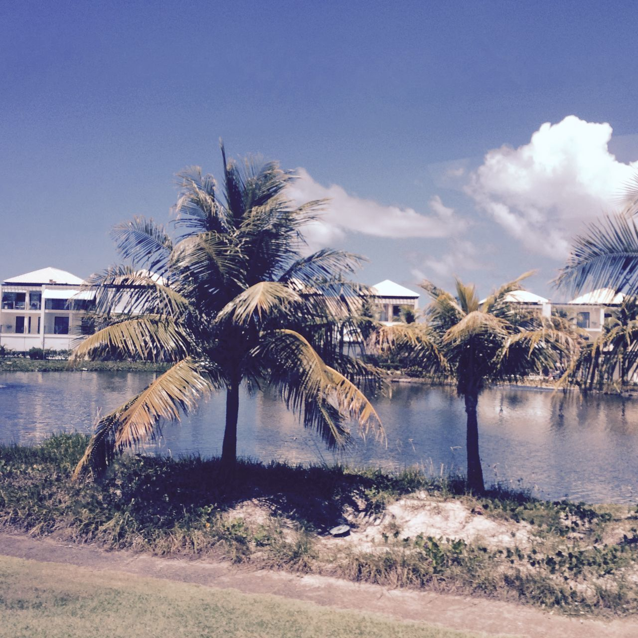 palm tree, tree, water, nature, day, outdoors, beauty in nature, sky, no people, scenics, architecture, building exterior