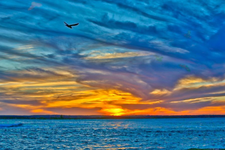 Beauty In Nature Cloud - Sky HDR Horizon Over Water La Perouse Nature No People Outdoors Scenics Sea Seagull Sky Sunset Sunset_collection Water