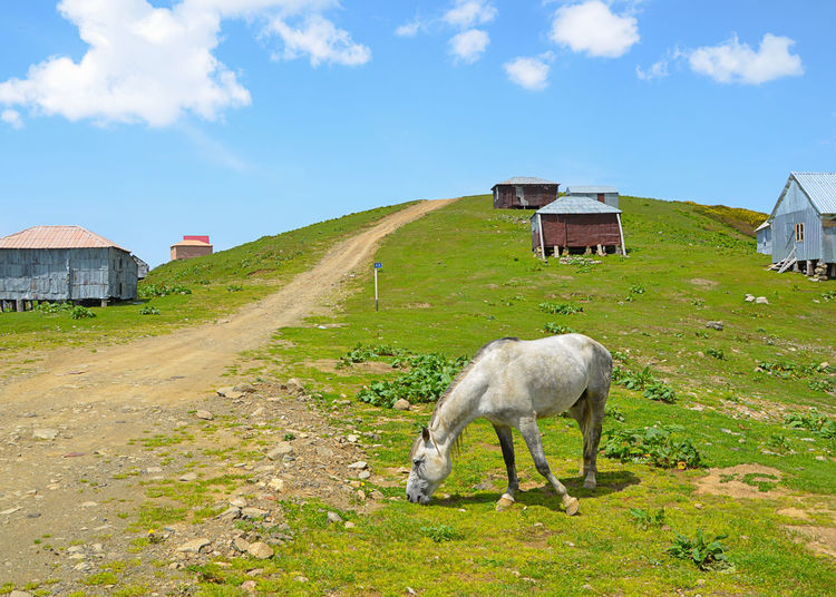 Horse on field by buildings against sky