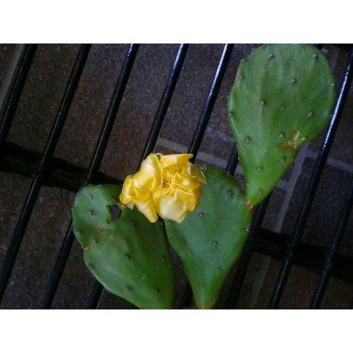 Igersmodena Fioritura Estate Summer Flowers Flowerinstagram Flores Giallo Yellow Mygarden Naturelovers Magicnature