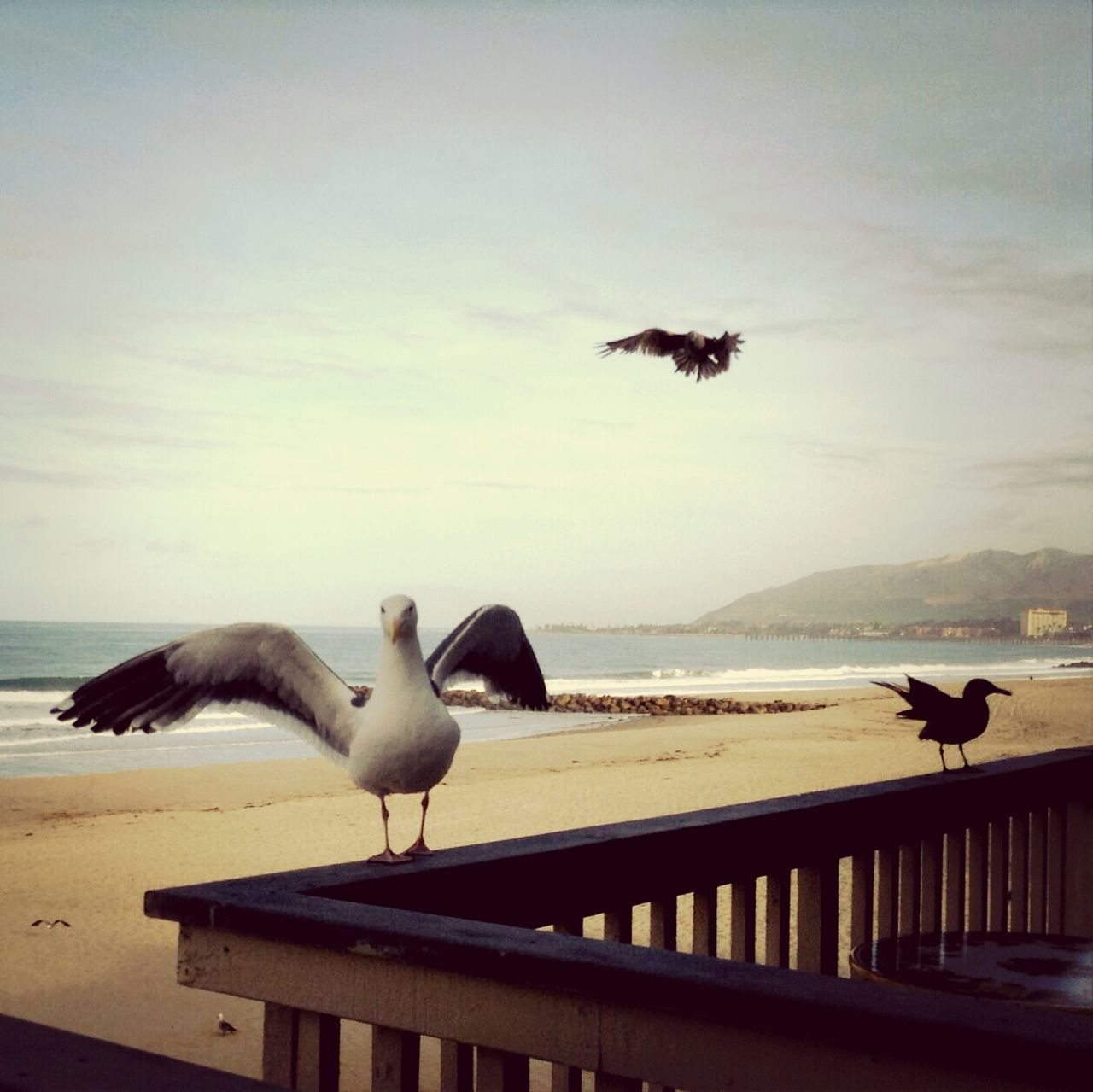 Seagulls On Wooden Railing By Beach Against Sky