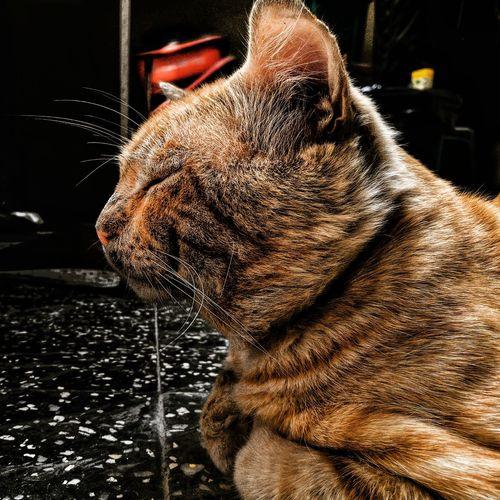 Domestic Animals One Animal Cats ElMocho Feline