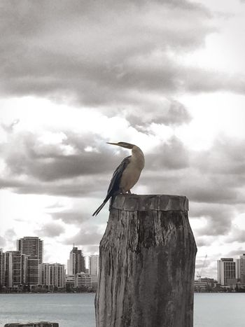 Animal Themes Animal Wildlife Animals In The Wild Architecture Bird Building Exterior Built Structure City Cloud - Sky Day Nature No People One Animal Outdoors Perching Sea Sky Water Wood - Material Wood Pole