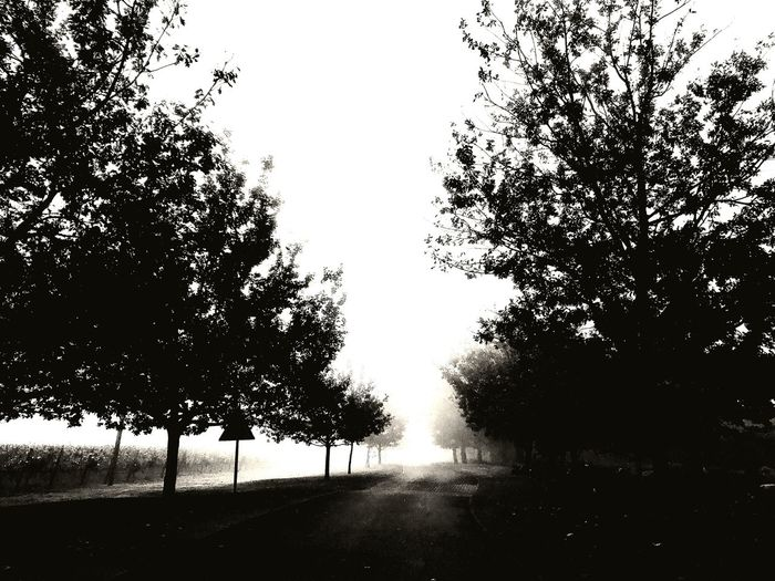 Autumn morning on Lourensford Tree Nature Beauty In Nature First Eyeem Photo