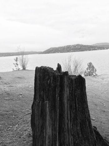Tree Stump Lake View