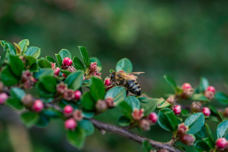 Animal Animal Themes Animal Wildlife Animals In The Wild Beauty In Nature Bee Bumblebee Close-up Flower Flower Head Flowering Plant Fragility Freshness Growth Honey Bee Insect Invertebrate Nature No People One Animal Plant Pollination Selective Focus Vulnerability