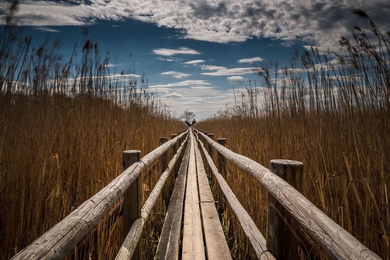Boardwalk amidst reed against sky