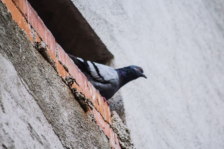 High angle view of bird perching on wall