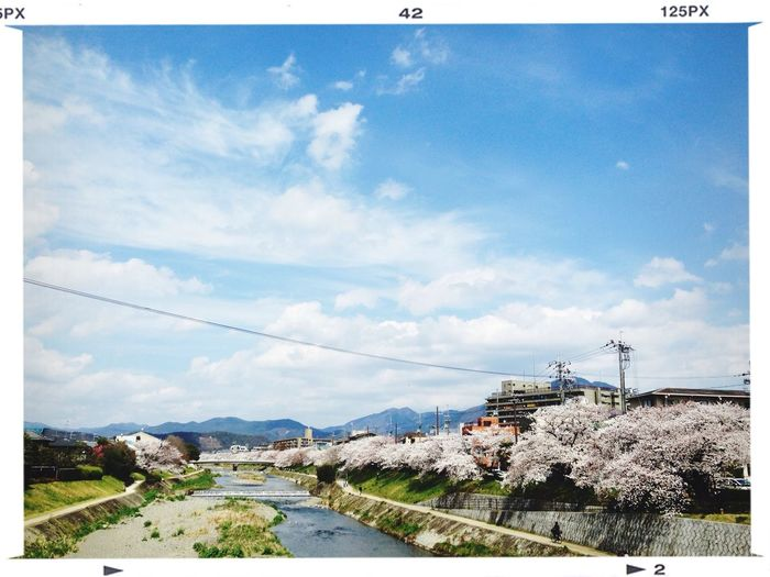 Kyoto Water_collection Cherry Blossoms Cloud And Sky