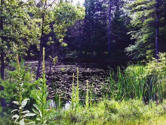 I'm a nature freak, I love all things green and lush, and the sounds of nature! Nature Beauty In Nature Tranquil Scene Water Tranquility Outdoors Scenics Plant Grass Boggs Green Color