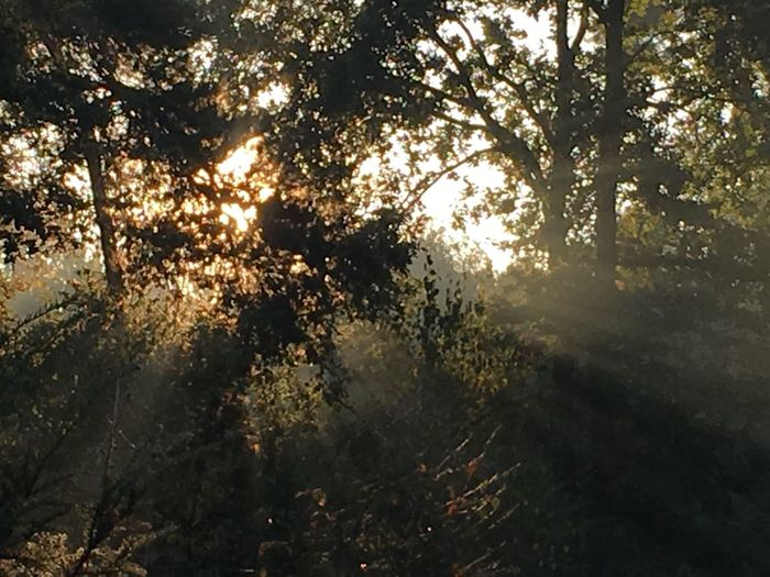 Sunlight through the forrest Tree Nature Outdoors Forest No People Sunlight Tranquil Scene Beauty In Nature Tranquility Scenics Beautiful Nature Naturephotos Naturephotography Eye4photography  Nature Photography EyeEmNewHere Eye Em Photography Light Lightbeams Sun Day