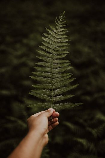 Soft Human Hand Hand Human Body Part One Person Tree Plant Holding Nature Plant Part Lifestyles Leaf Outdoors Close-up First Eyeem Photo