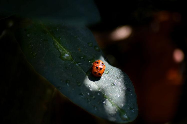 High angle view of ladybug on leaf