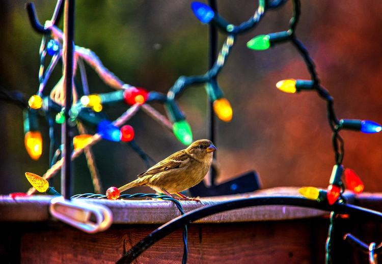 Bird and lights