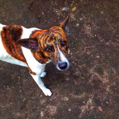 One Animal Pets Domestic Domestic Animals Animal Animal Themes Canine