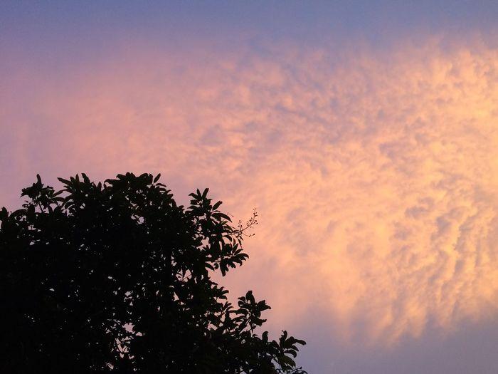 Cloud & sky Sky Sunset Tree Plant Silhouette Cloud - Sky Beauty In Nature Nature