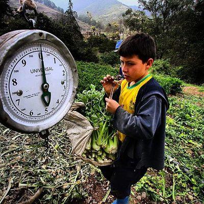Niño agricultor pesa la cosecha en la poblacion de El Cobre en el municipio Jose Maria Vargas del Estado Tachira  en Venezuela Venezuelatravel Venezuelaes Gotravelfree Gf_venezuela Gf_colombia IG_GRANCARACAS IgersVenezuela Insta_ve Instapro_ve IG_Venezuela InstaLoveVenezuela Instafoto_ve Instaland_ve Destinomaschevere Tequierovenezuela Thisisvenezuela Icu_venezuela Ig_lara Igworldclub Ig_tachira IG_Panama Instaland_ve Elnacionalweb everydaylatinamerica great_captures_vzla