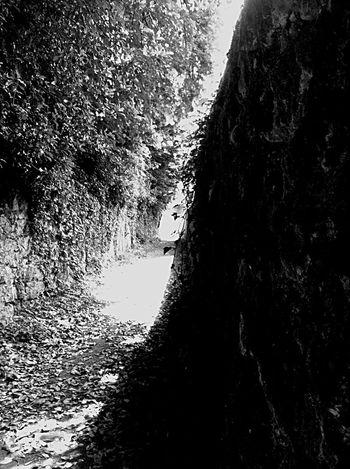Chosen Paths Behind The Veils