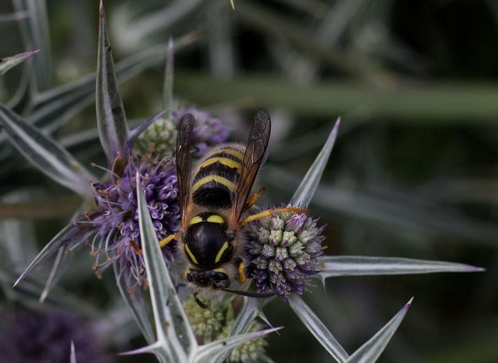 Wasp Summer
