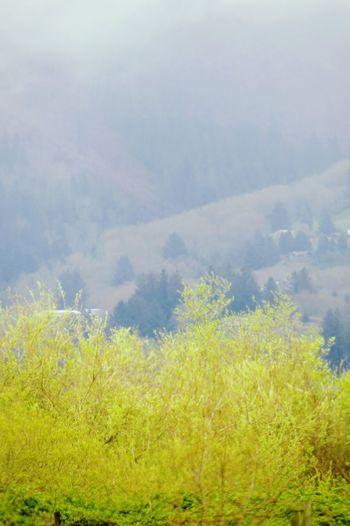 Mist Misty Misty Hillside Misty Mornings Misty Mountainside