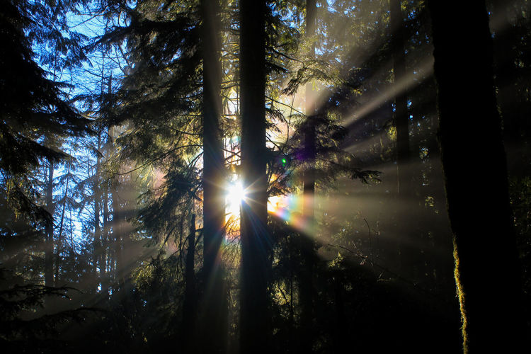 Beauty In Nature Branch Day Forest Growth Halo Lens Flare Nature No People Outdoors Rainbow Rainbow Colors Rainbow Halo Scenics Sky Sun Sun Rays Behind The Tree Sunbeam Sunlight Sunlight Sunlight And Shadow Tranquility Tree Tree Trunk