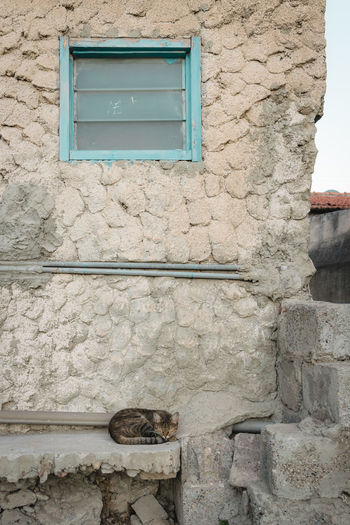Building Exterior Built Structure Copy Space Day No People Old City Stray Cat Wall Window