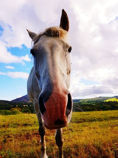 Horse One Animal Cloud - Sky Sky Nature Grass Mammal No People Field Stalion Riding Animal Themes Pet Portraits