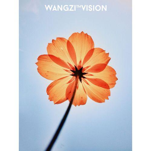 花样年华 合肥影像 Snapseed IPhoneography 手机摄影 IPhone4s Photography Flower Instasize 街头摄影