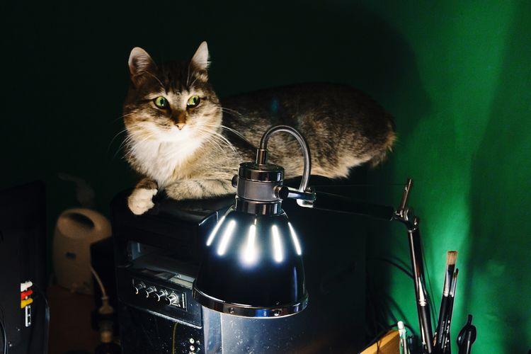 Cat sitting on cpu near illuminated lamp at home