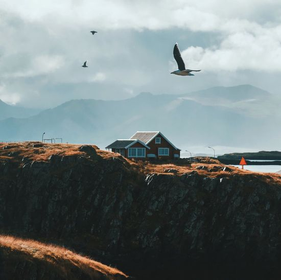 Bird Flying Sky Building Exterior Mountain Animal Themes Animals In The Wild Built Structure Architecture No People Nature House Outdoors Cloud - Sky Animal Wildlife Day Spread Wings Beauty In Nature Water Landscape Iceland Cliff Cabin