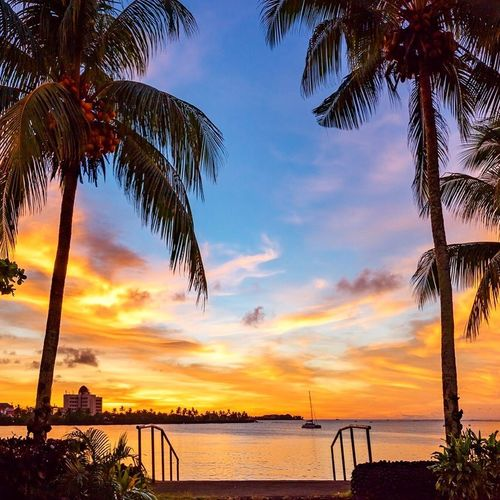 Sunsets in the South Pacific Sea Sunset Water Tree Beach Beauty In Nature Scenics Palm Tree Tranquility Idyllic Horizon Over Water Tranquil Scene Cloud - Sky Silhouette Tree Trunk Outdoors Sky Nature No People Travel Destinations