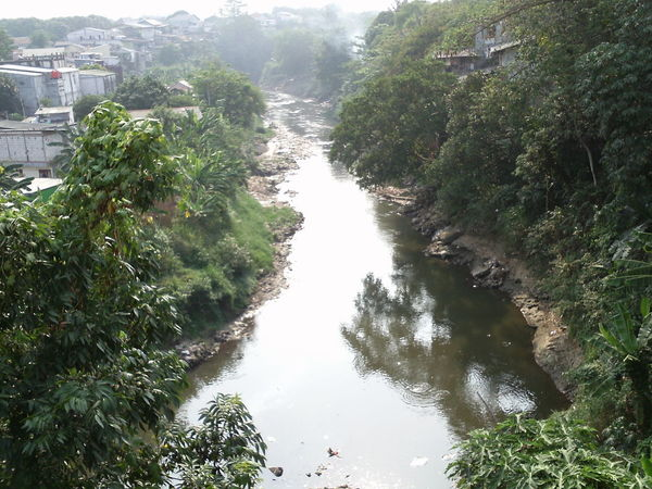 ciliwung river in jakarta Architecture Beauty In Nature Building Exterior City Day Flowing Water Green Color Growth High Angle View Nature No People Outdoors Plant River Riverside View Scenics - Nature Tranquil Scene Tranquility Tree Water