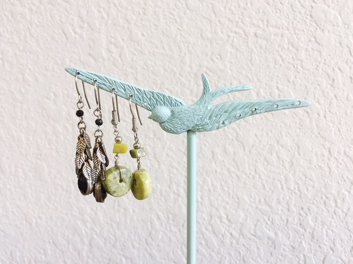 Close-up of parrot on wall