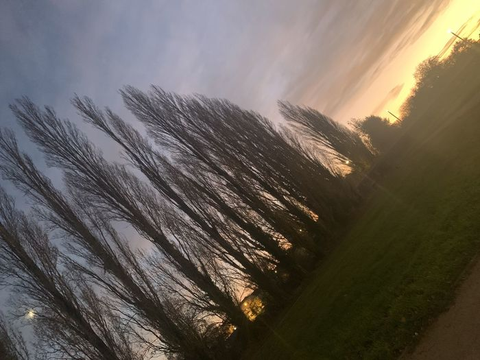 Low angle view of trees against sky during sunset
