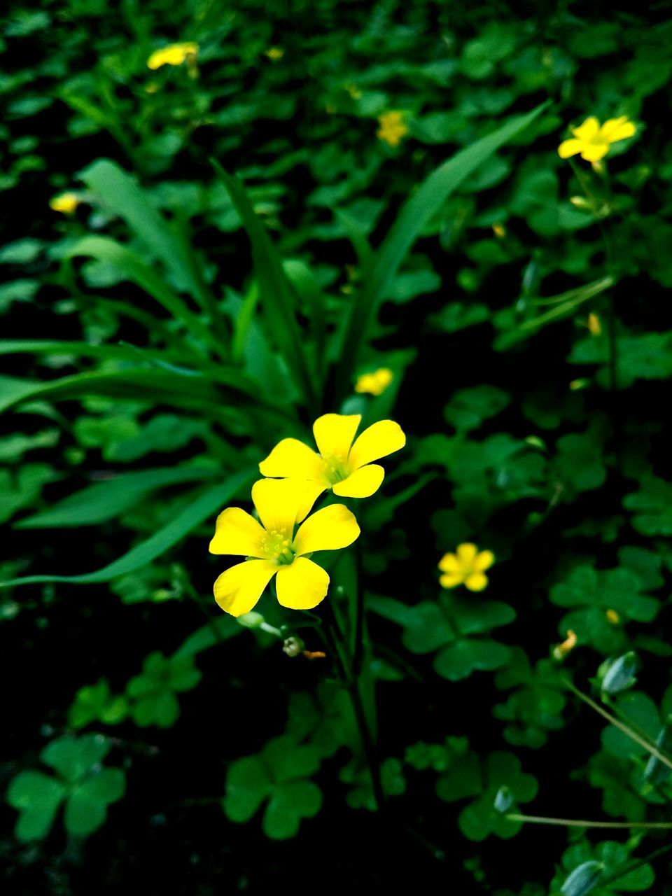 flower, yellow, growth, fragility, petal, nature, beauty in nature, freshness, green color, flower head, plant, blooming, no people, outdoors, day, close-up