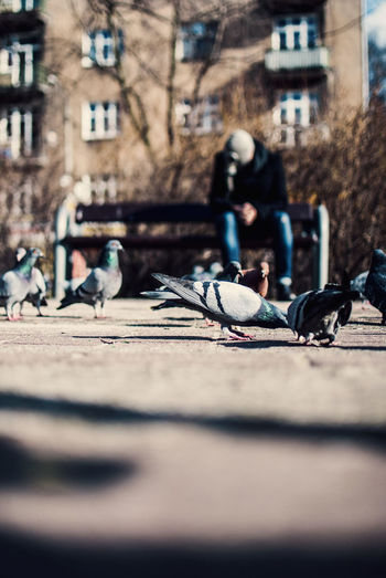 Close-up of birds in city