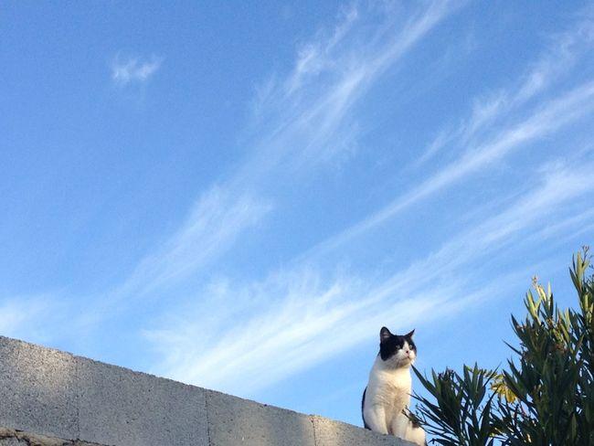 Cielo Cielo Y Nubes  Sky Gato Cat Pet Linares Sin Filtros Andalucía Diciembre Showcase: December IPhone IPhoneography