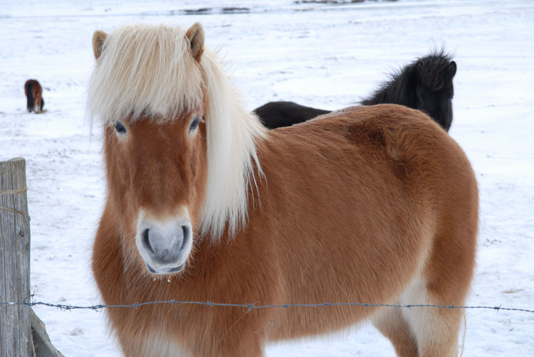 Close-up of horse standing on snow