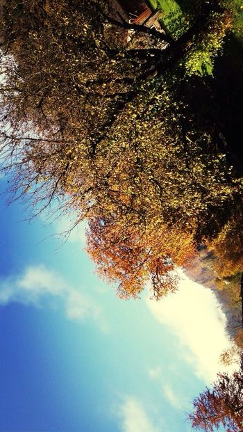 Upside Down Autumn Sunshine