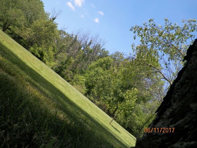 Beauty In Nature Day Grass Growth Nature No People Outdoors Sky Text Tree