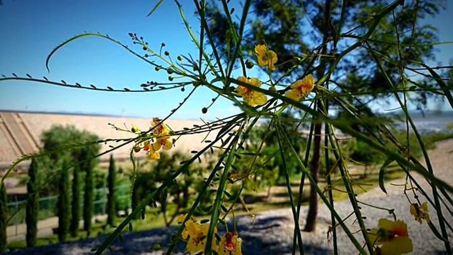 Nature Outdoors Day Sky Plant No People Water Tree Flower Close-up First Eyeem Photo capturada con Sonyz1 en San Luis Potosí Mexico
