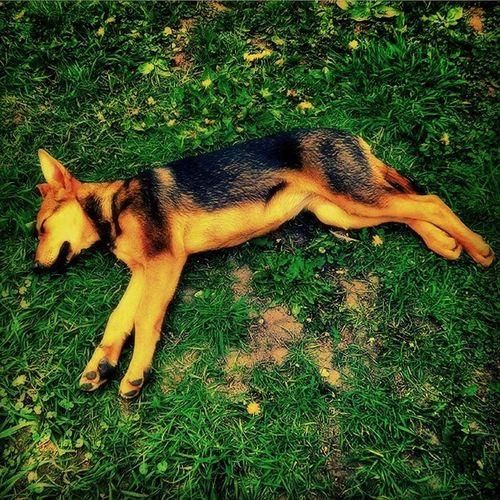 __________________________________ Sleep Dog Grass Podolsk Russia сон собака трава Подольск Россия __________________________________