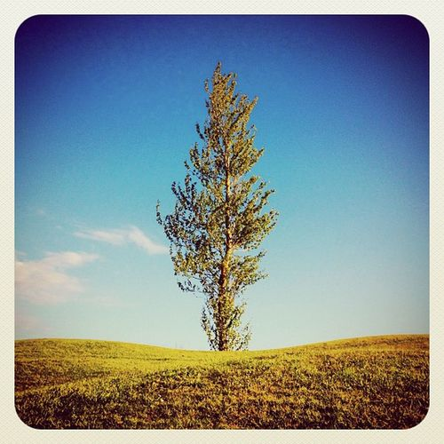 Lonely Tree ☀? #earlybirdlove #ebstyles_gf #golfcourse #golf #jj #jj_ireland #ubiquography #gf_ire #ireland Golf Ireland Golfcourse Jj  Earlybirdlove Ubiquography Ebstyles_gf Gf_ire Jj_ireland