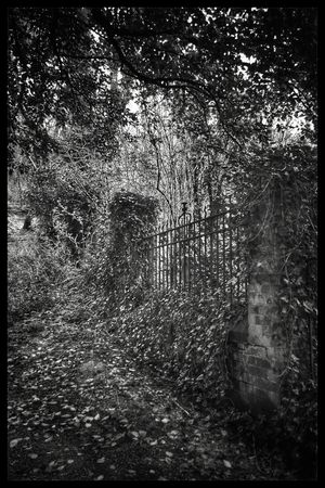 Old Path Holywood Black & White Overgrown And Beautiful