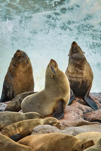 Seal colony, skeleton coast namibia