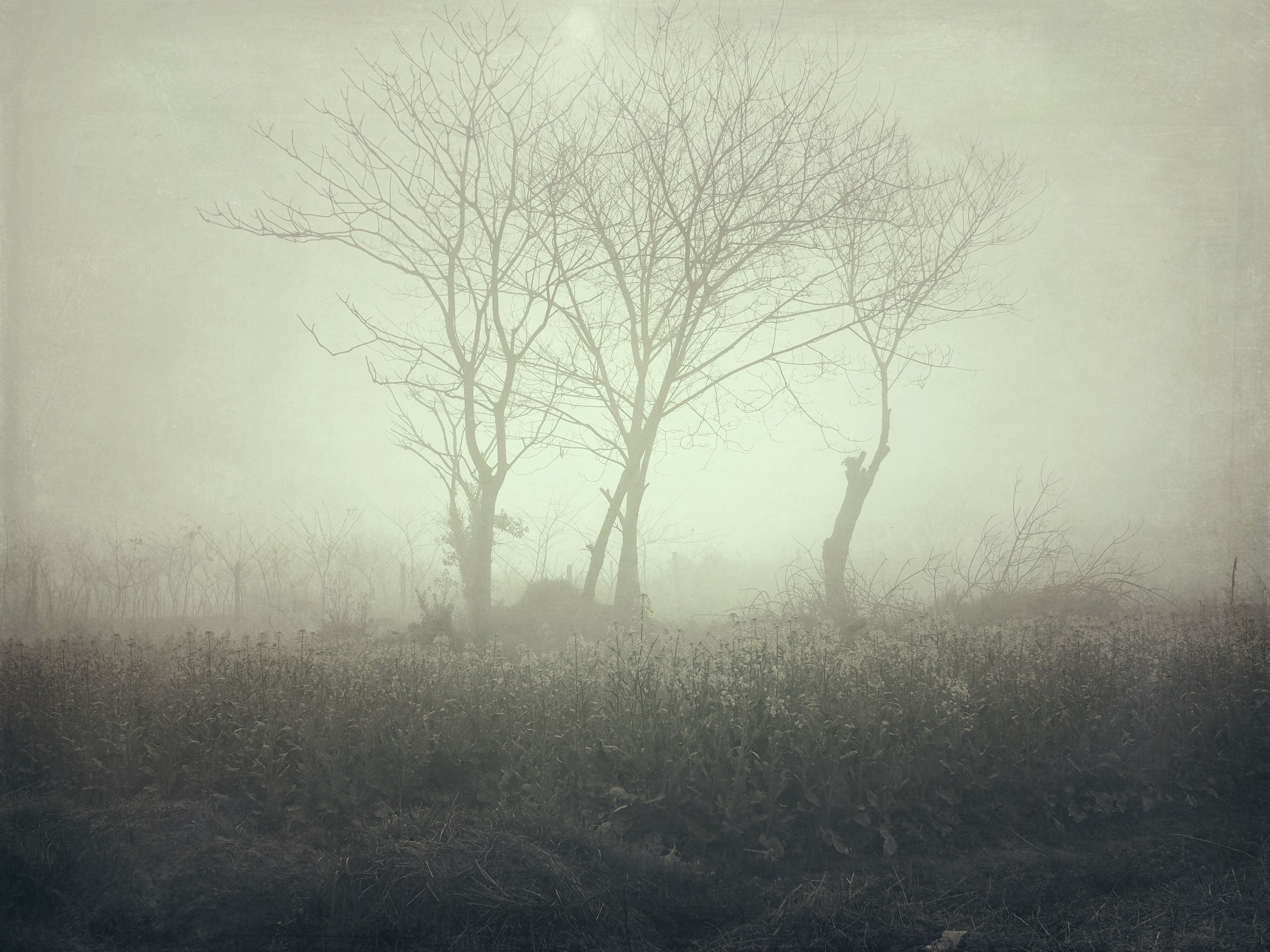 nature, tree, no people, outdoors, day, bare tree, fog, beauty in nature, hazy