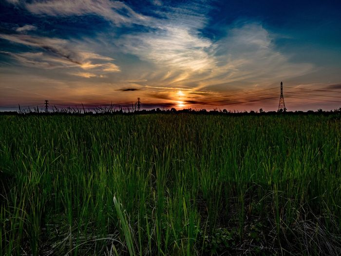 Sky Cloud - Sky Field Sunset Nature Growth Tranquil Scene Agriculture Tranquility Grass Beauty In Nature Scenics Landscape Crop  No People Outdoors Plant Rural Scene Architecture Day Lost In The Landscape