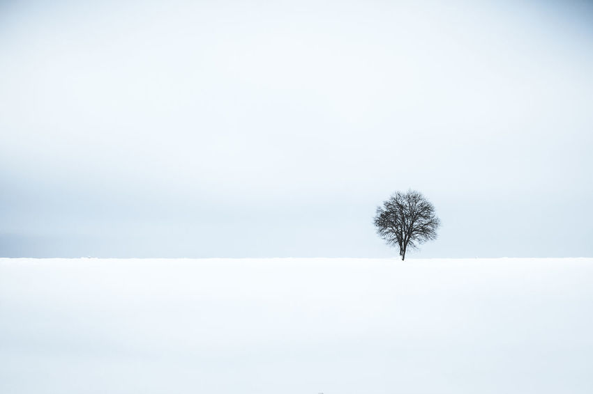 Cold Temperature Winter Tree Snow Sky Tranquility Nature Tranquil Scene Land Beauty In Nature Environment Day Landscape White Color Field Solitude No People Outdoors Snowing Lonely Tree