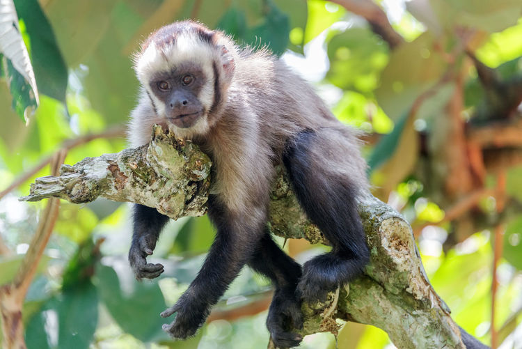 Monkey resting on tree at forest