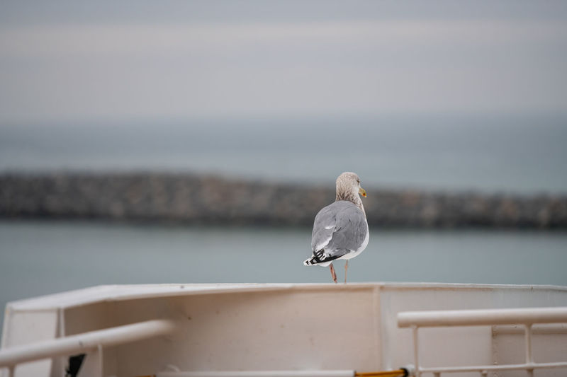 Seagull perching on railing against sea